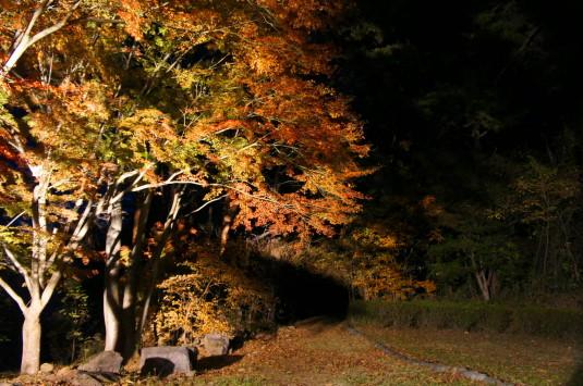 紅葉 武田の杜 ライトアップ