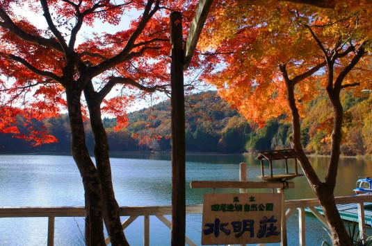 紅葉 四尾連湖 水明荘 紅葉