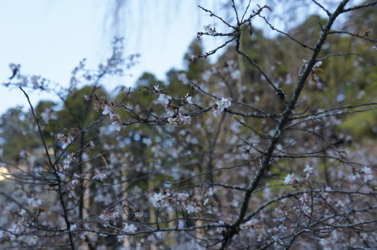紅葉 久遠寺 桜
