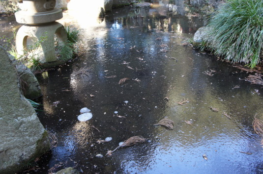 初詣 河口浅間神社 氷