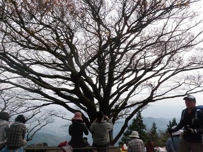 111030雨降りの木