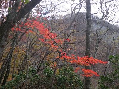 111112山頂近くの紅葉