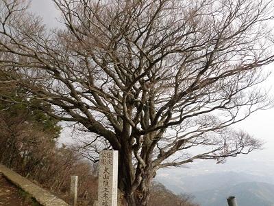 111114雨降りの木