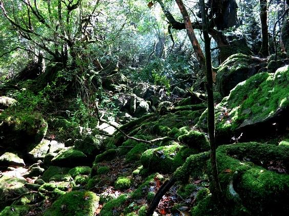 もののけの森2