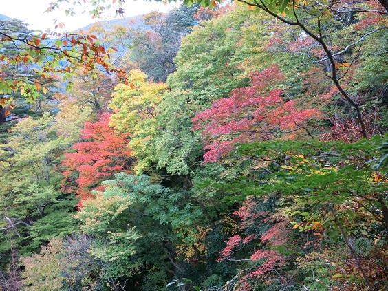 IMG_0137三徳山紅葉