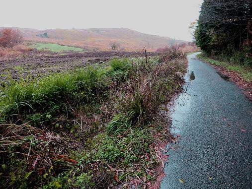 牧草地の道2