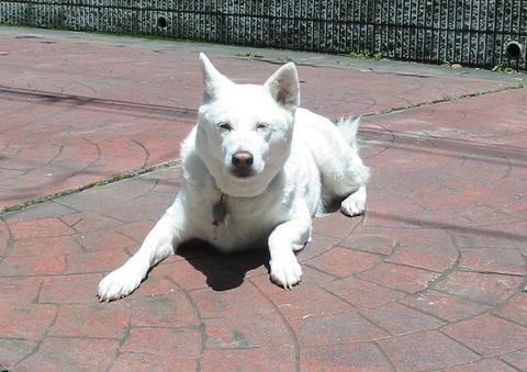 犬たち40034