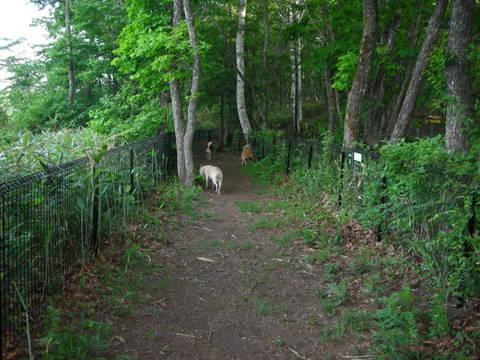レジーナの森0024