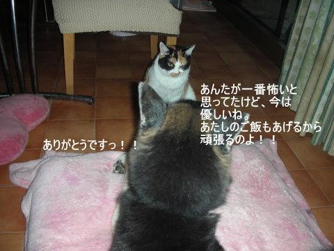 龍馬0162-1