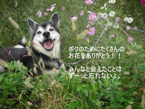 龍馬の笑顔