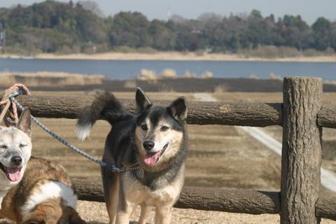 犬たち0144