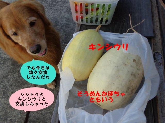 004_20130807192136f16.jpg