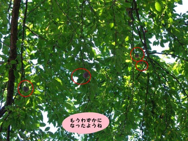 005_20130720141543.jpg