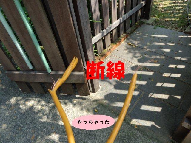 005_20130804204131ea2.jpg