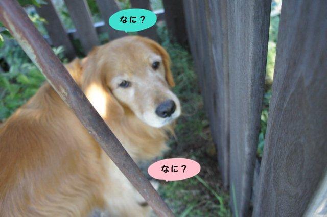 006_20131001212822cda.jpg
