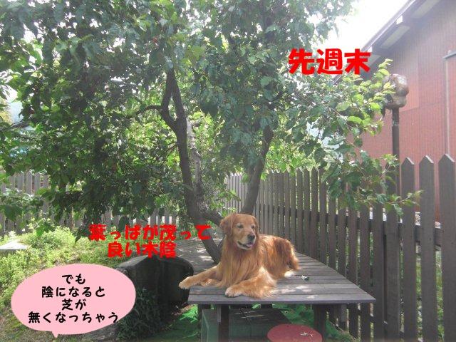 008_20130611193755.jpg