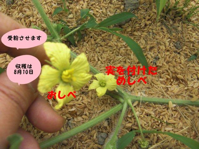008_20130629152814.jpg