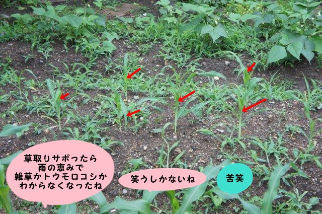 009_20130619191109.jpg