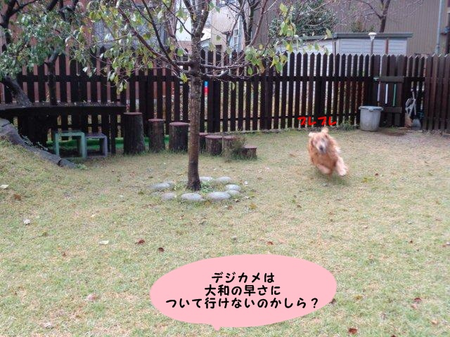 009_20131121195853c3b.jpg