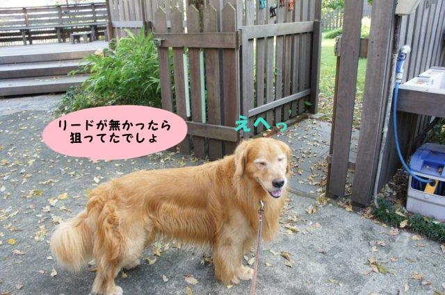 010_201309102053150da.jpg
