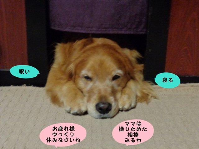 010_20131111064800692.jpg