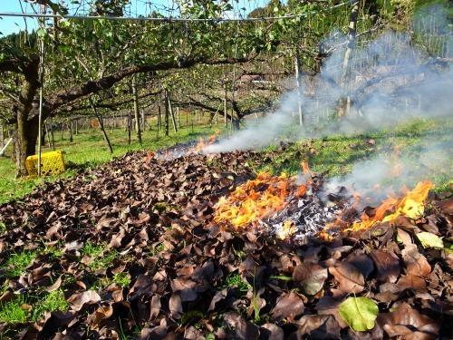 葉を焼いてしまう。