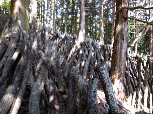 原木椎茸栽培2
