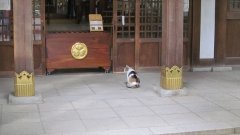 131125愛宕神社 (11)_R