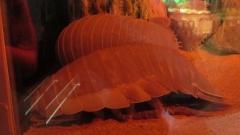131205鳥羽水族館 (80)_R