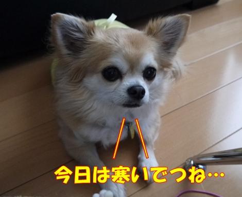 gf5P1100788.jpg