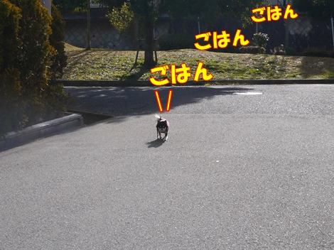 gf5P1110430.jpg