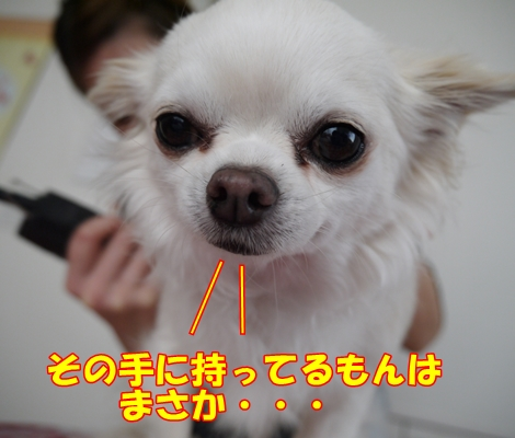 gf5P1110695.jpg