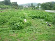 ☆やつ農園