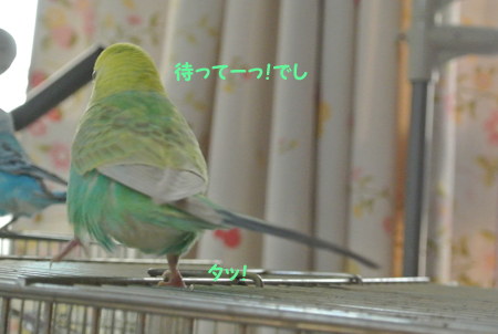 2013 11 04_hck_0072_edited-1