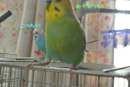 2013 11 04_hck_0069_edited-1