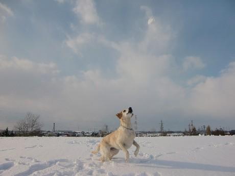 雪だま大好き♪