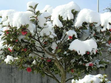 2月21日雪3