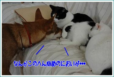 20091211222253c84.jpg