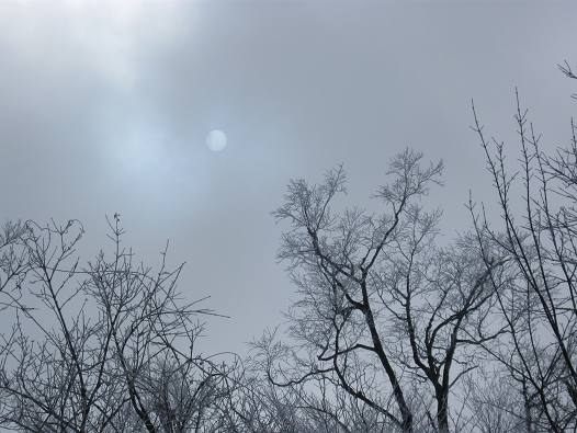 2013-02-03-1046(117)0008.jpg