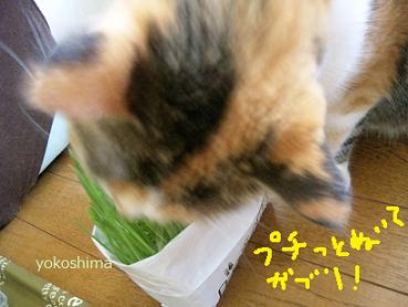 ミーちゃんのネコクサ