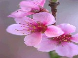 s_flower-f006-08.jpg