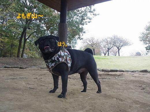 RIMG0676_20111118203228.jpg