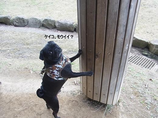 RIMG0685_20111118203223.jpg