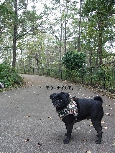 RIMG3946_20111104191042.jpg