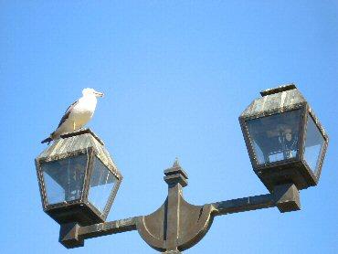 青い空白い鳥
