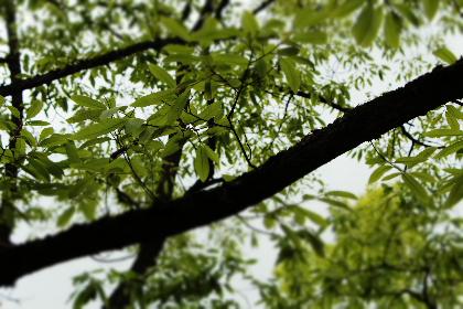11IMG_005(1)_20110524112907.jpg