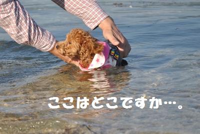 海に突っ込んじゃいました…。