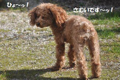 DSC_0109_20130131140817.jpg