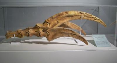 Therizinosaurus_claw.jpg