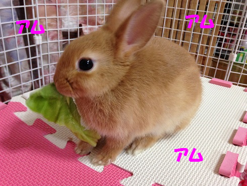 IMG_2404.サラダ菜